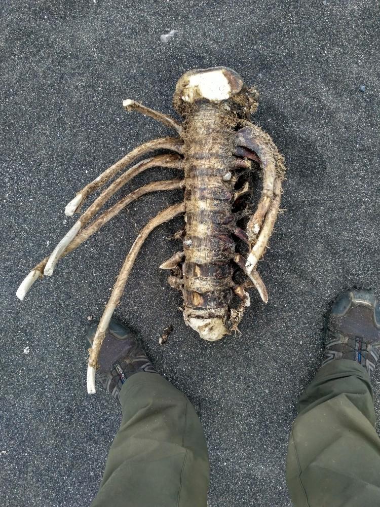 Скелет на острове Сахалин