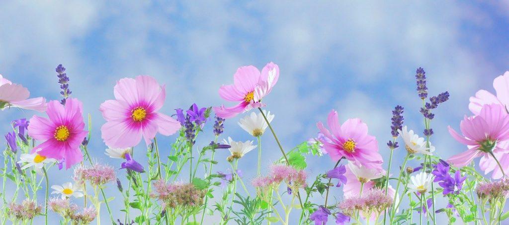 wild flowers, flowers, plant